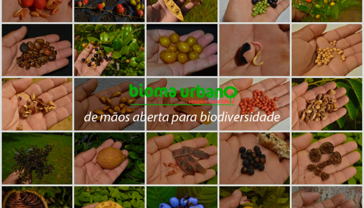 Rede de Coletores de Sementes Nativas do Nordestes